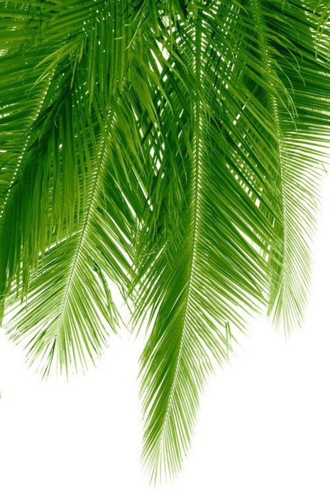 palm fronds tumblr - photo #17