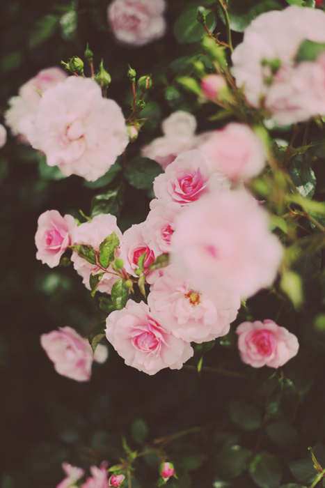 cool, cute, garden, vintage, flowers