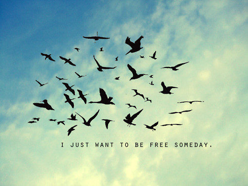 Bird Quotes About Life. QuotesGram Freedom Birds Tumblr