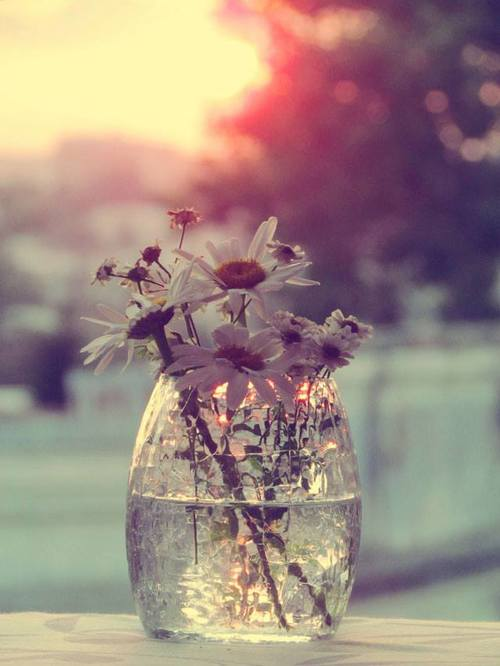 beautiful, bokeh, bring me flowers, colors, evening