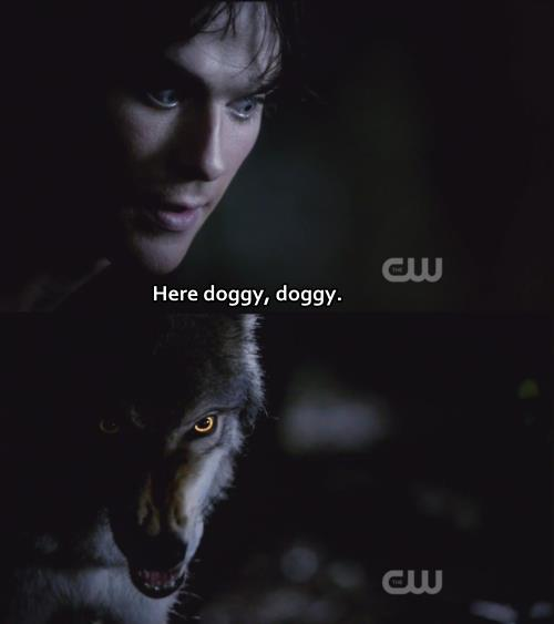 the vampire diaries quotes about love quotesgram