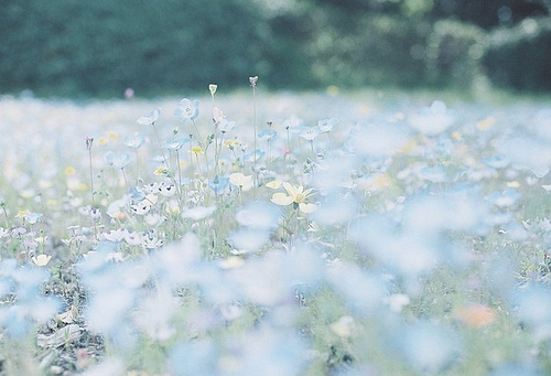 cute, flowers, pastel, photography, pretty flowers