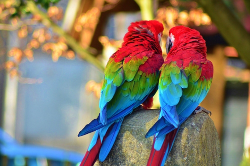 animals, birds, color and colorful