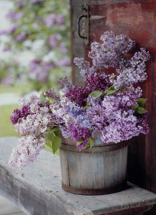 lavender, lilac, rustic wedding and shabby chic
