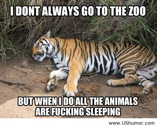 ics funny animals funny images funny jokes funny kids funny