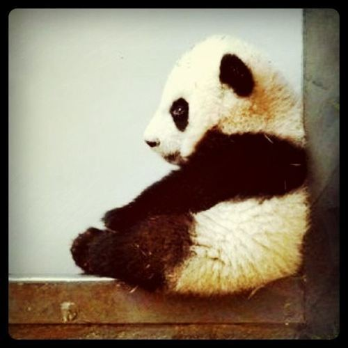 bored, lonley, black, love, panda