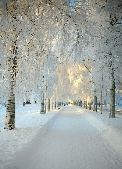 beautiful, photography, snow