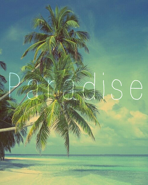 beach, palm tree, paradise, summer
