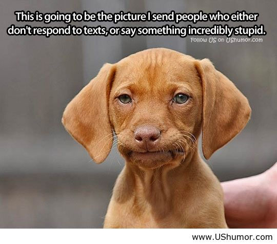 Dog Face Meme Dog Amp 39 s Silly Face us Humor
