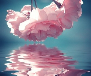 dream, pink, rose, water, ∞