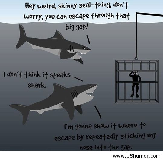 Quotes About Sharks - All About Quotes Ideas