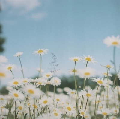 camp,  cute,  sky,  flowers,  blue,  lovely,  indie,  nature,  flower,  garden,  wood