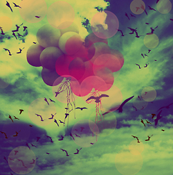 balloons, birds, free, circels, freedom, sky