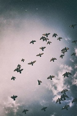 Freedom | via Tumblr - image #862555 by korshun on Favim.com