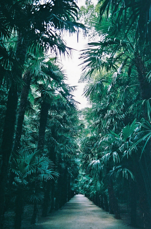 green, natural, nature and palm