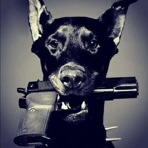 dog, gangsta, gangster, gun, puppy, swag, weapon