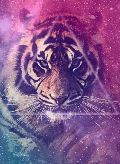 Tiger tumblr background - photo#4