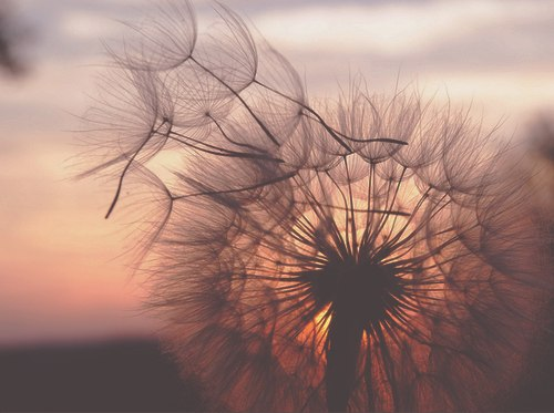 away, beautiful, photography, bloom, blow, bright, flower, shine, cute, heart, like, love, lovely, picture, down, sun, under, wish, evening, night, nature, nice, photo, pic, wishes