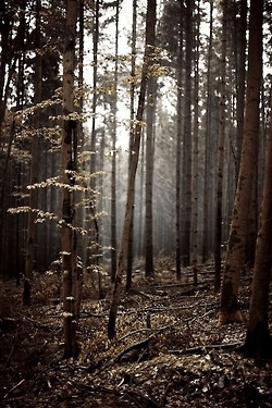 Forest and brown