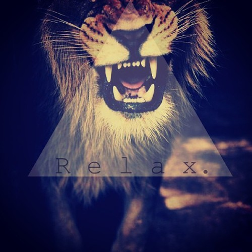 lion, relax, swag