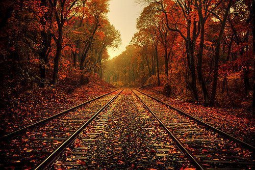 beautiful, train, fall, sweet, tree, red, yellow