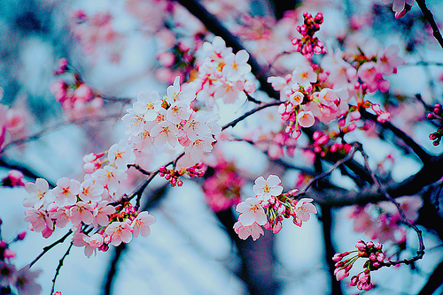 Image result for cute flowers tumblr