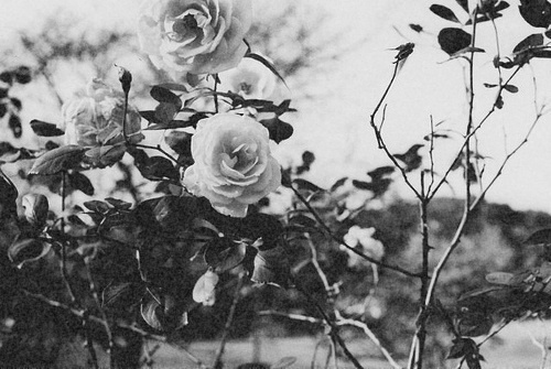 love, black and white, flower, rose