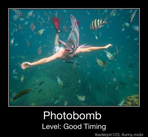 Fish Funny Sea Awesome Face Snorkeling Swimming Underwater
