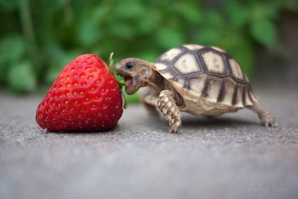 animals, baby, food, turtle