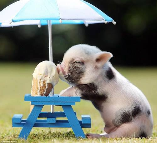 adorable, cute, ice cream and pig