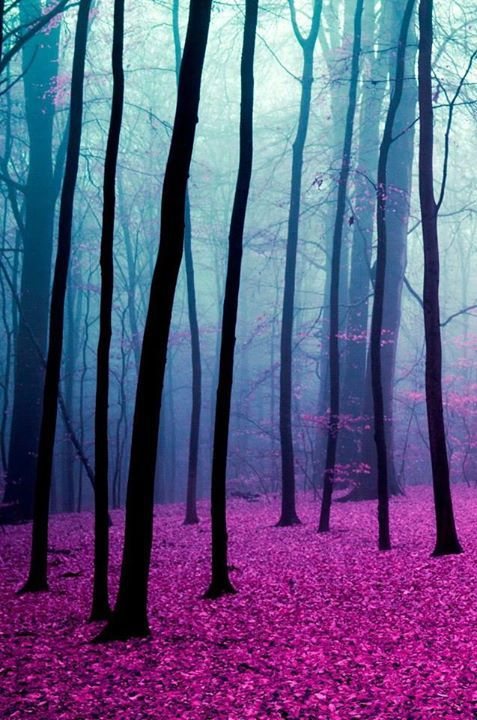 backgrounds  beautiful  blue  dark  forest  photography  pink  pretty    Pretty Dark Blue Backgrounds