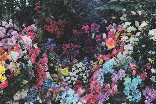 Live Flower Garden : Live awesome via tumblr image by awesomeguy