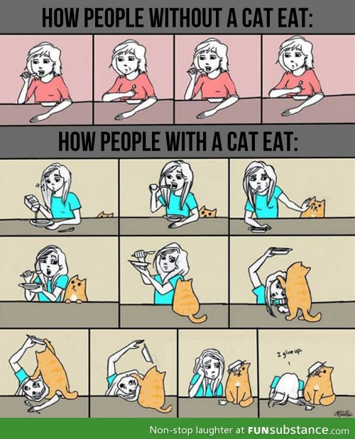 awesome, cat, eat, funny, how, humor, lol, photo, quotes, text, owners