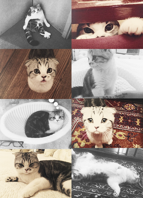 1 direction, beautiful, cat and cute