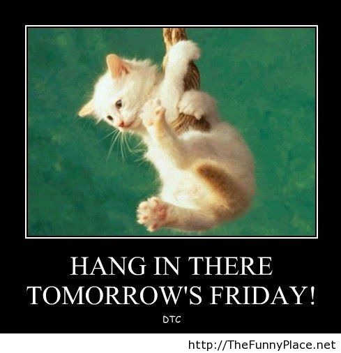 Hang In There Funny Quotes. QuotesGram