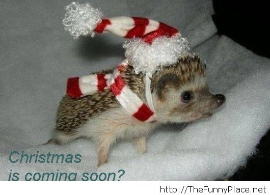 Chrismas Is Coming Soon   Funny Pictures, Awesome   Image #1024422 By  Thefunn.