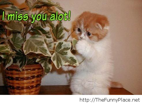 I miss you alot cute pic - Funny - image #1023022 by ...