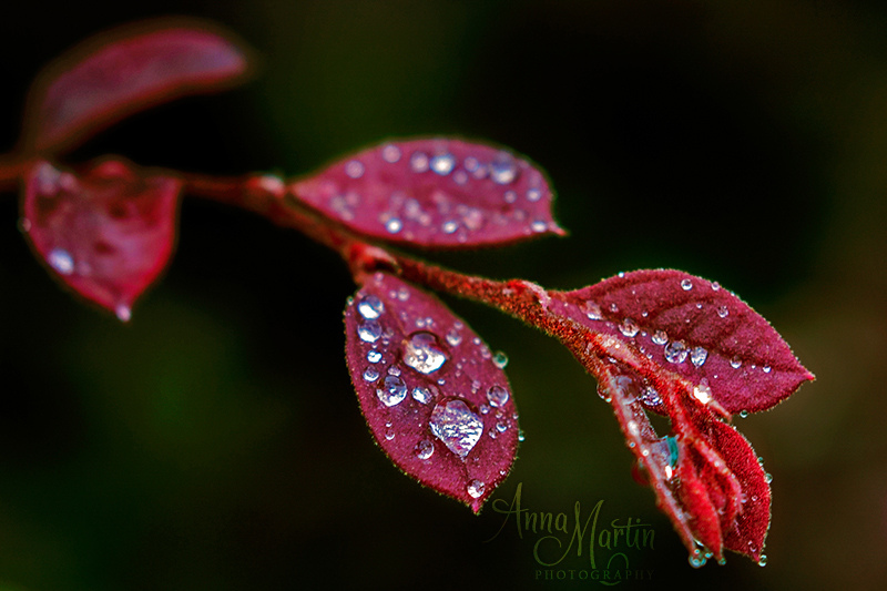 dreamy, drop, droplet and droplets