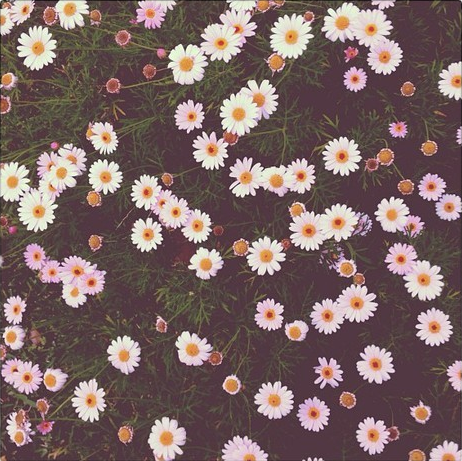 Flowers♥ | via Tumblr - image #1065697 by nastty on Favim.com