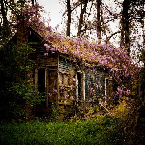 Into the woods via tumblr image 1062586 by nastty on - Houses woods nature integrated ...