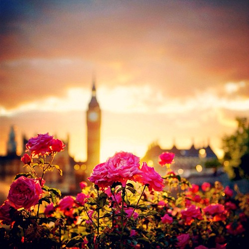 pretty, clouds, london, cooool, beautiful, sun, wanna be there, in love, flower