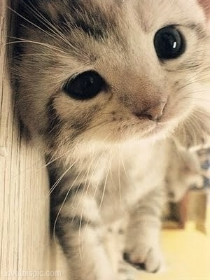 adorable, animal, cat, closeup, cute, kitten, kitty, pet, silly