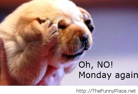 Funny Quotes About Mondays Monday Again Funny Animal