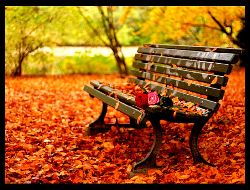 autumn leaves on bench - photo #3