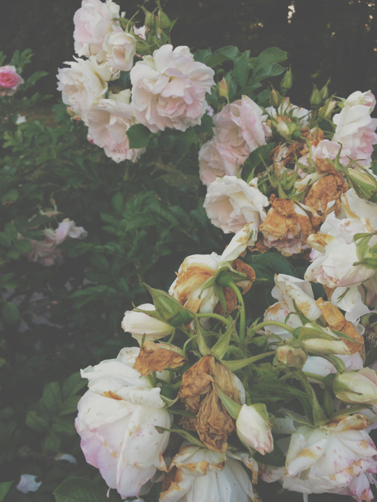 Flowers green heart hipster love photo pink rose roses theme