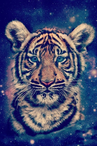 Hipster tiger face - photo#22