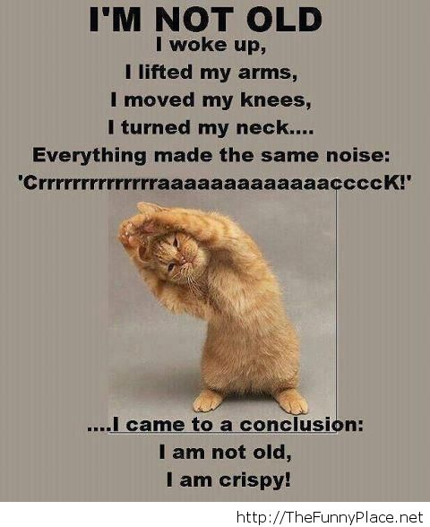 funny animals, funny conversations, funny memes, funny messages, funny quotes, funny quotes and sayings, funny 2014, funny Christmas 2013, happy new year 2014, funny sayings 2014