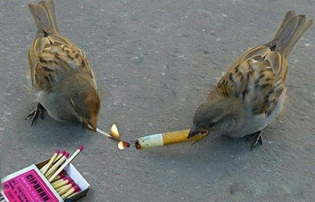 animals, birds, funny pic and smoke