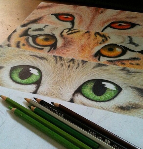 animal, talent, color, swag, like, cool, eyes