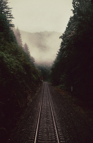 forest, road, fog, tracks, train, woods, landscape